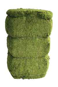 Evergreen Moss Green Bale, 46 Pounds
